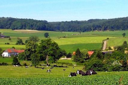 impressie landschap zuid limburg